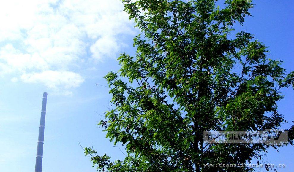 Baia Mare-Flori de salcam-1