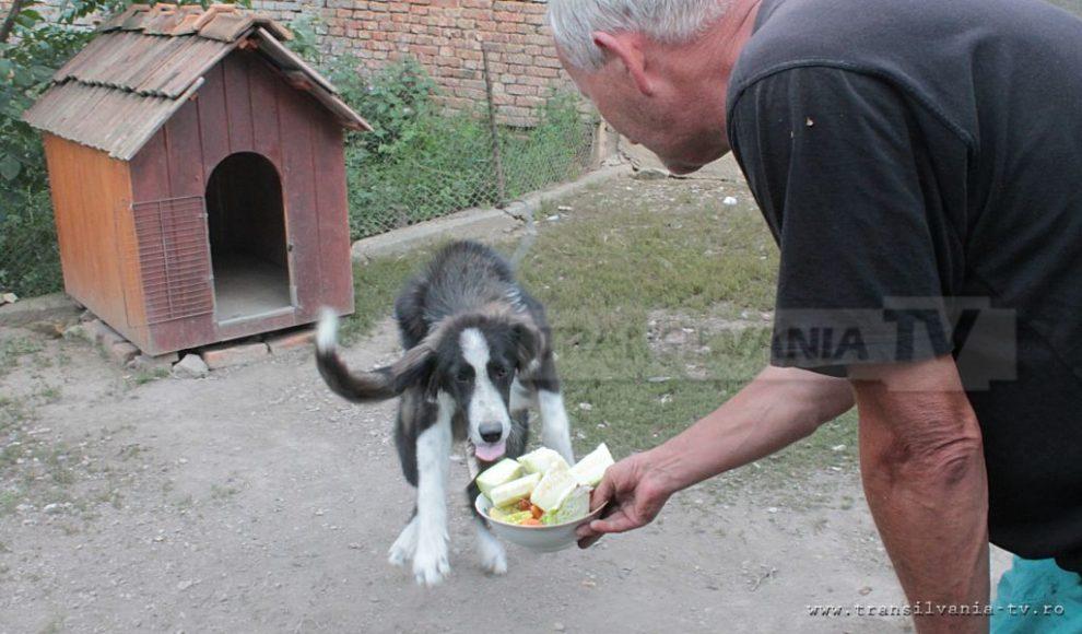 Letca-cainele vegetarian-1