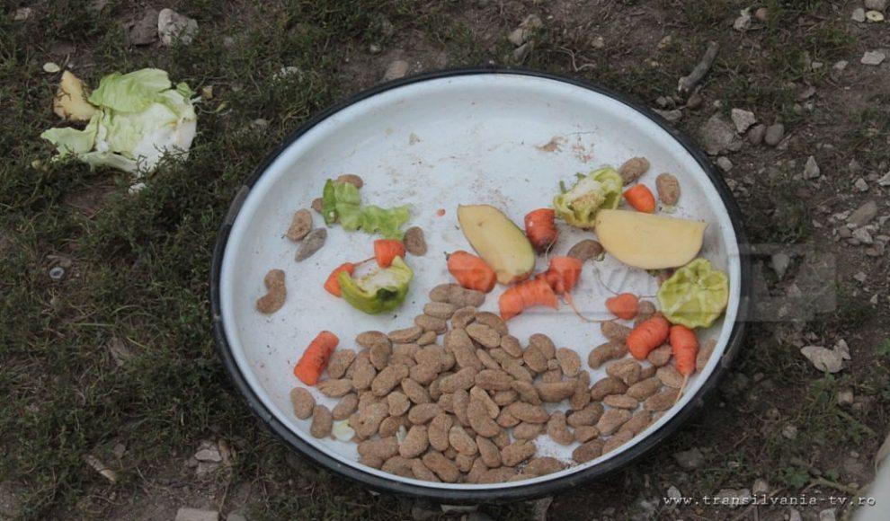 Letca-cainele vegetarian-2